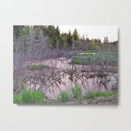 Mountain Swamp Metal Print