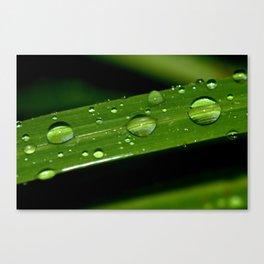 Macro shot of Rain Drops on a Plant Leave Canvas Print