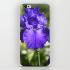 Purple Bearded Iris iPhone & iPod Skin