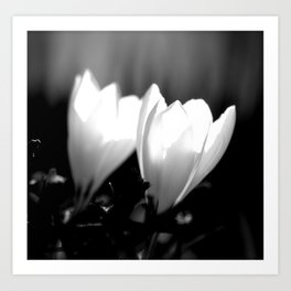 You Two - Crocus Flowers Black And White Art Print