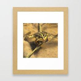 Marsh Frog Framed Art Print