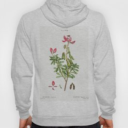 Ononis fruticosa from Traite des Arbres et Arbustes que lon cultive en France en pleine terre (1801- Hoody