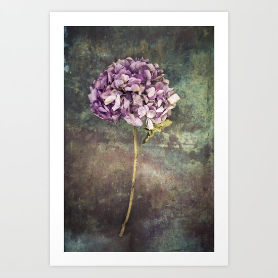 Beautiful Hydrangea Art Print