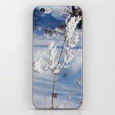 Winter sprig iPhone & iPod Skin