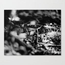 FALLEN SILVER - Fomapan Creative 200 (4x5 film) Canvas Print
