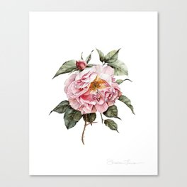 Wilting Pink Rose Watercolor Canvas Print