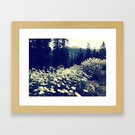Daisy fields of September Framed Art Print
