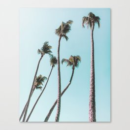 costa rica palms Canvas Print