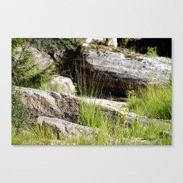 Natures Garden Canvas Print