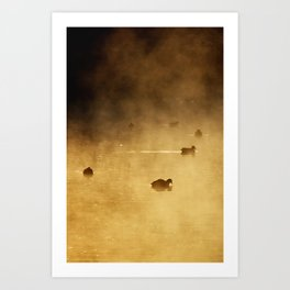 COOTS IN LAKE Art Print