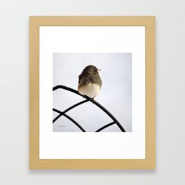 Pretty Winter Junco Framed Art Print