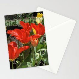Lewes Tulips Stationery Cards