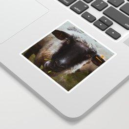 Sheep portrait close up, mountain sheep, animal photography Sticker