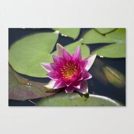 Longwood Gardens - Spring Series 305 Canvas Print
