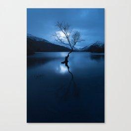 lonely tree snowdonia Canvas Print
