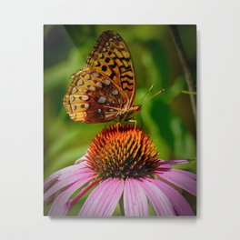 Aphrodite Fritillary Butterfly Metal Print