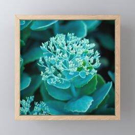Flower Buds - I Framed Mini Art Print
