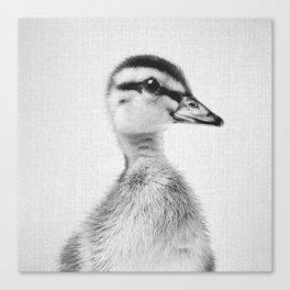 Duckling - Black & White Canvas Print