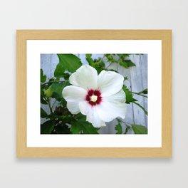 White Hibiscus Flower Ruffle Framed Art Print