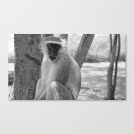 Curious, George? B&W Canvas Print