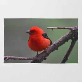 Scarlet Tanager - A Nature Art Print Rug