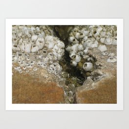 barnicle growth Art Print