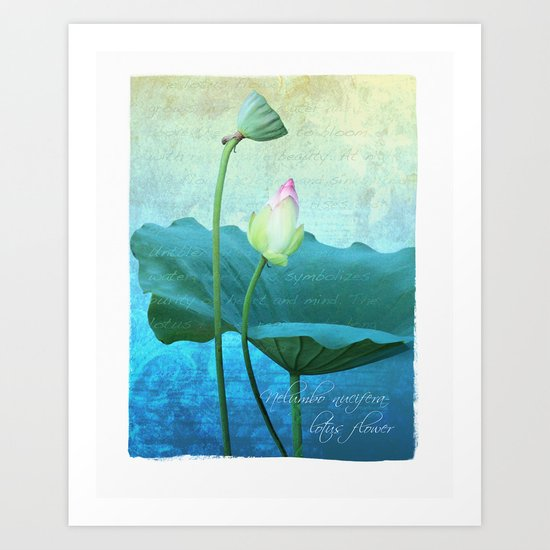 New Lotus Art Print