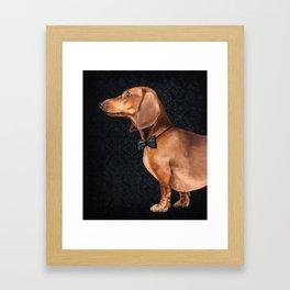 Elegant dachshund. Framed Art Print