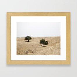The holm oak Framed Art Print