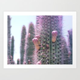 Prickly in Pink II Art Print
