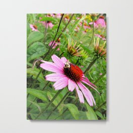 Napping Bumble Bee Metal Print