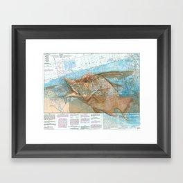 Hogfish Framed Art Print