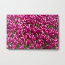 Field of magenta tulips.  Metal Print