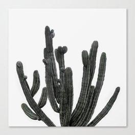 Black and White Cactus Canvas Print