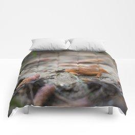 Spring Walk Comforters
