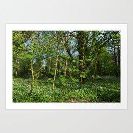 Saplings in Spring Art Print