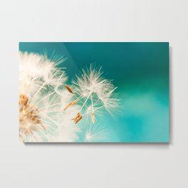 dandelion seeds blowing in turquoise Metal Print