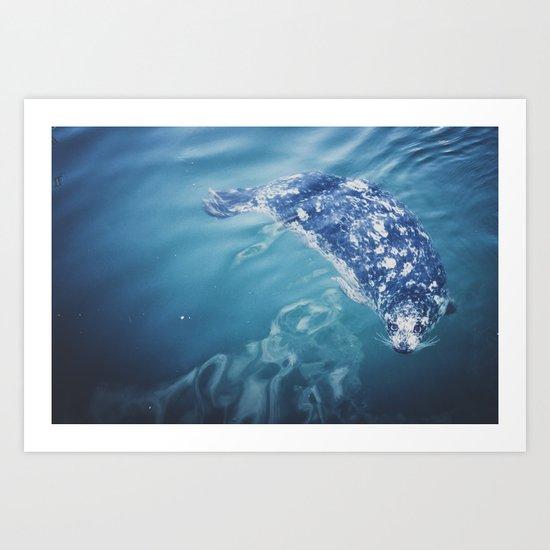 Wild Harbor Seal Art Print