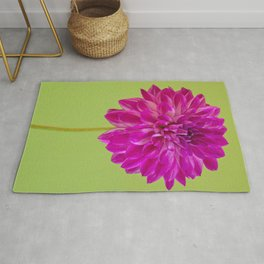 Close-up image of the flower dahlia on green background. Shallow depth of field. Rug