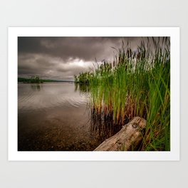 Driftwood And Cattails Art Print