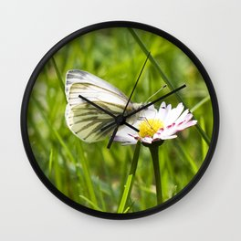 WHITE BUTTERFLY on COMMON DAISY Wall Clock