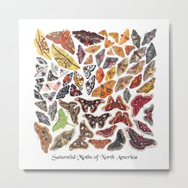 Saturniid Moths of North America Metal Print