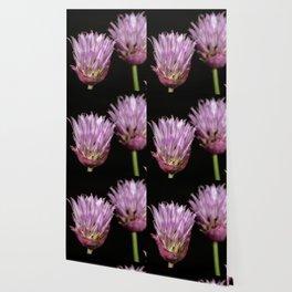 Purple clove flowers Wallpaper
