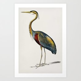 Purple heron (Ardea purpurea) illustrated by Charles Dessalines D' Orbigny (1806-1876) 2 Art Print