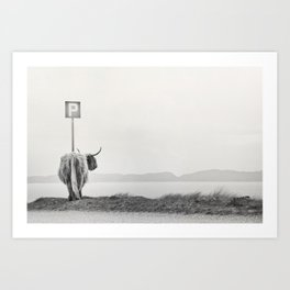 highland visitor Art Print
