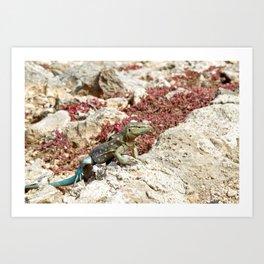 Blue Whiptail Lizard Art Print