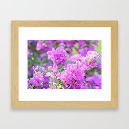 Purple Flowers in the Garden Framed Art Print