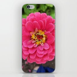 Bloomed Pink Zinnia Flower iPhone Skin