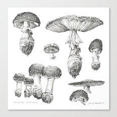 Amanita Muscaria Mushroom Study Canvas Print