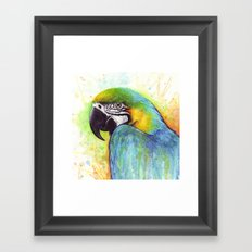 Macaw Bird Parrot Colorful Tropical Animal Framed Art Print